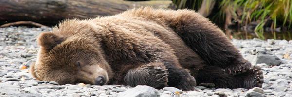 Is the bear market already over?